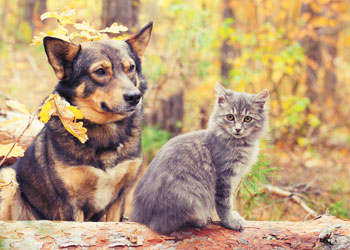 Skin-Soothing Herbs for Dogs and Cats